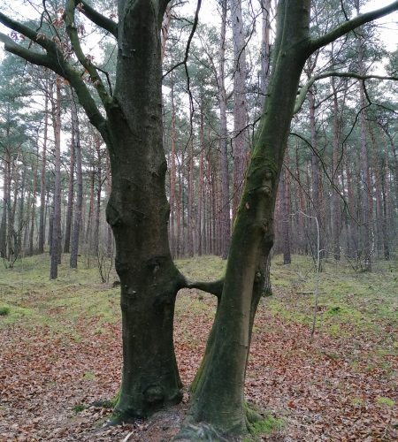 foto-bomen
